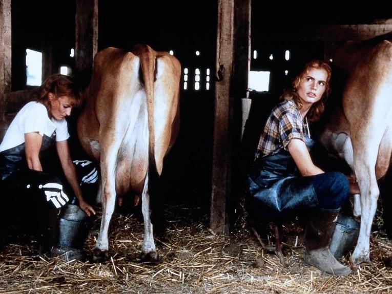 a-league-of-their-own-davis-petty-cows