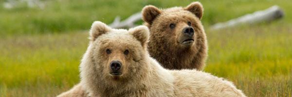 bears-slice