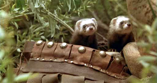 Hollywood  Adapt This  THE BEASTMASTERThe Beastmaster Ferrets
