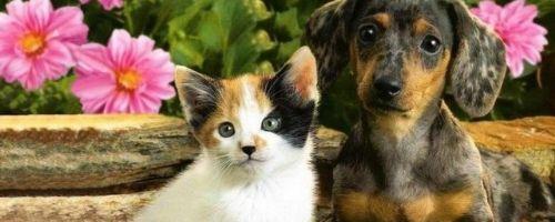 cat-dog-slice