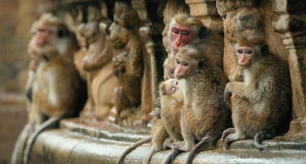 monkey-kingdom-trailer