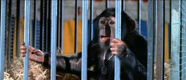 escape-from-the-planet-of-the-apes-baby-milo