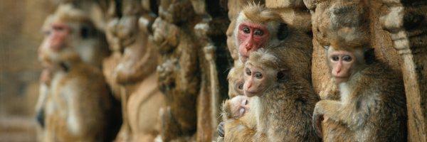monkey-kingdom-release-date-slice