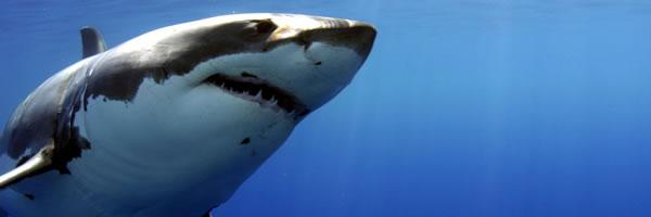 shark_slice_01