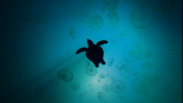 turtle-the-incredible-journey-movie-image-5