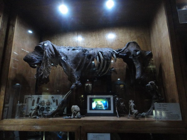 weta-cave-store-image (8)